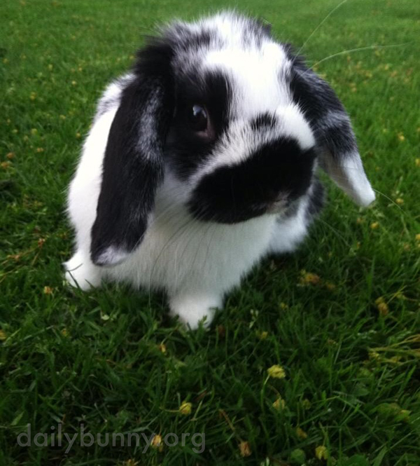 Bunny Can't Believe There's So Much Space Outside for Running and Binkying!