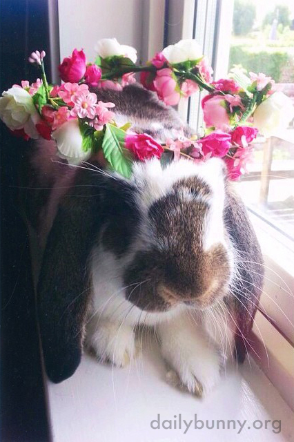 Bunny Celebrates Midsummer with a Flower Crown