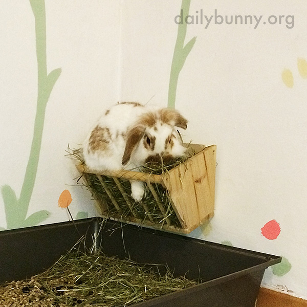 Bunny Has Found a More Efficient Way of Getting All the Hay She Wants