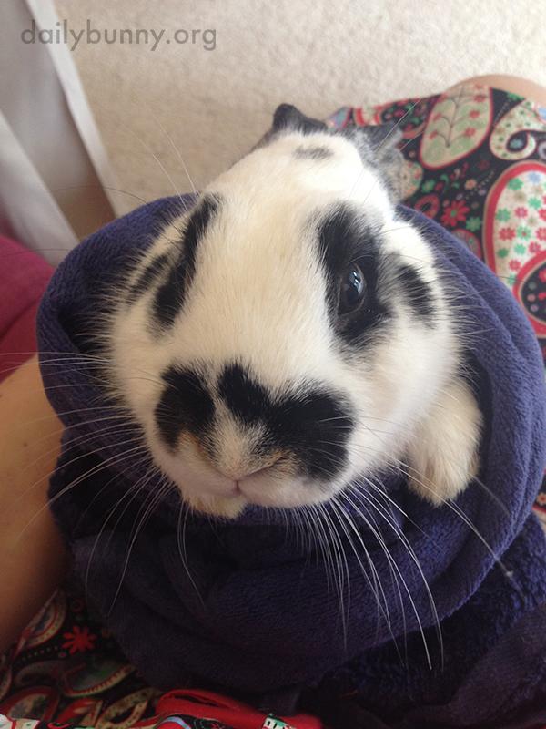 Bunny Is Burrito-ed