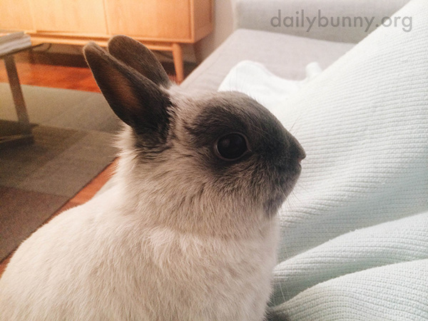 Bunny Is Here for Snuggles, Please