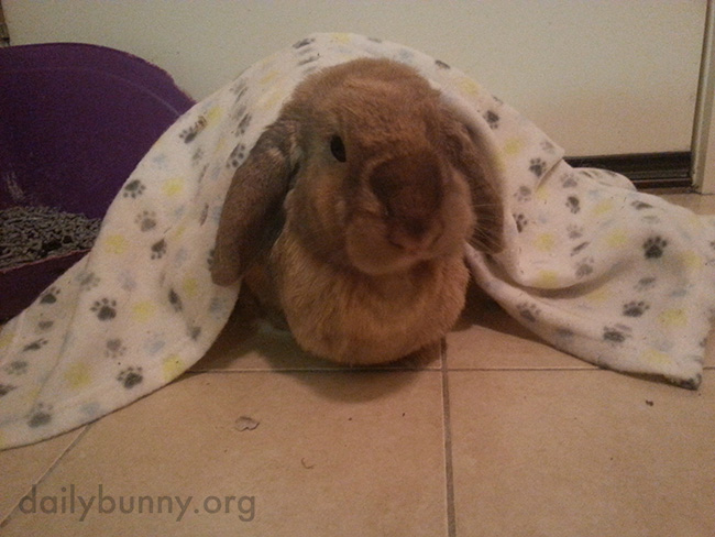 Bunny Is Snug as a Bun in a Rug
