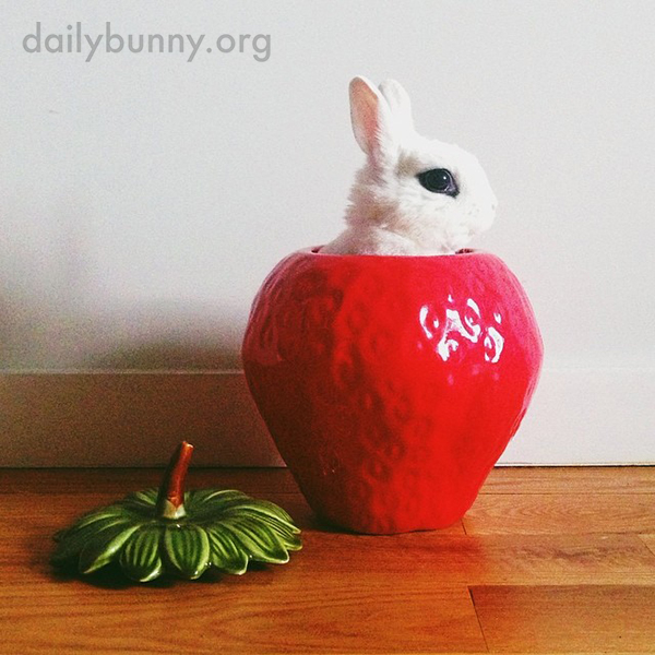 Bunny Is a Little Disappointed This Giant Strawberry Isn't for Eating