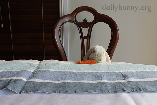 Bunny Runs Off with a Carrot 1
