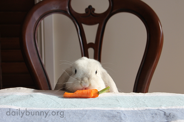 Bunny Runs Off with a Carrot 2