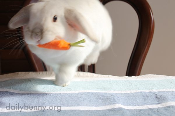 Bunny Runs Off with a Carrot 3