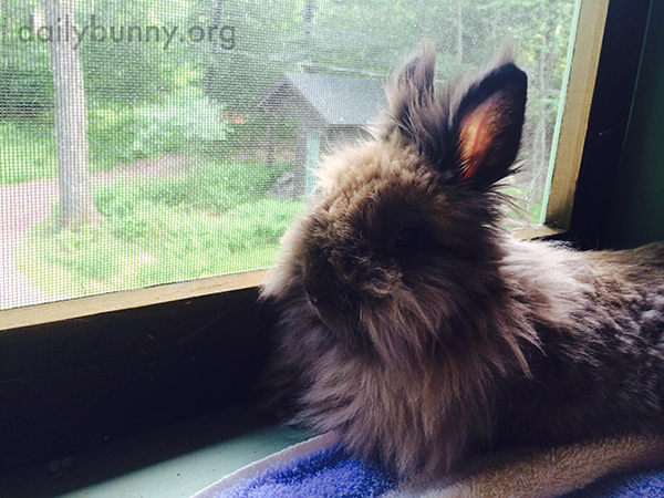 Bunny Sits on the Windowsill and Contemplates the Outdoors 1