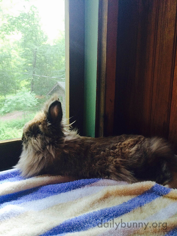 Bunny Sits on the Windowsill and Contemplates the Outdoors 2