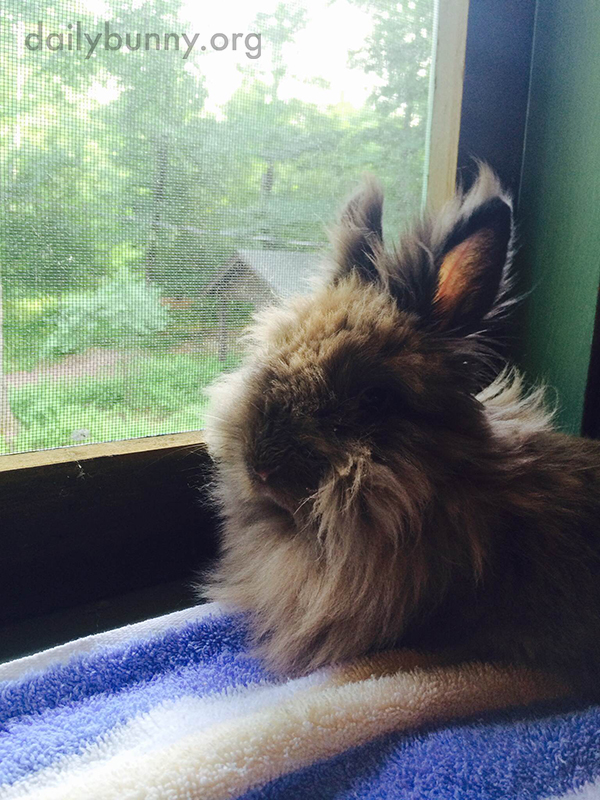 Bunny Sits on the Windowsill and Contemplates the Outdoors 3