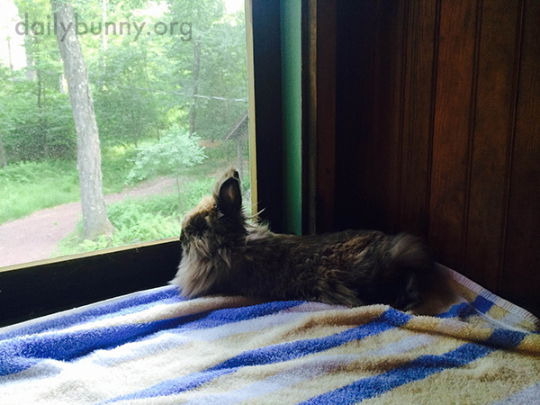 Bunny Sits on the Windowsill and Contemplates the Outdoors 4