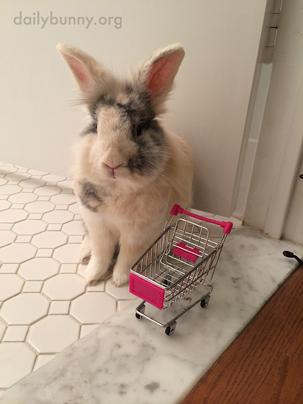 Bunny Starts His Shopping Trip with an Empty Cart, But Soon Fills It with Tiny Carrots 1