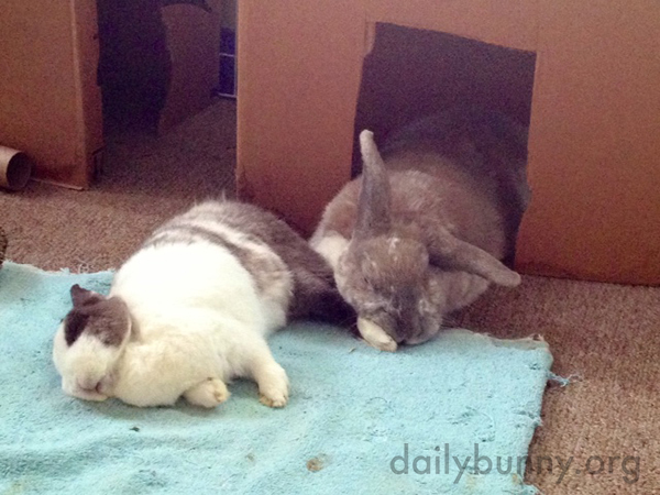 Sleeping with a Friend's Foot in His Face Isn't a Problem for Bunny