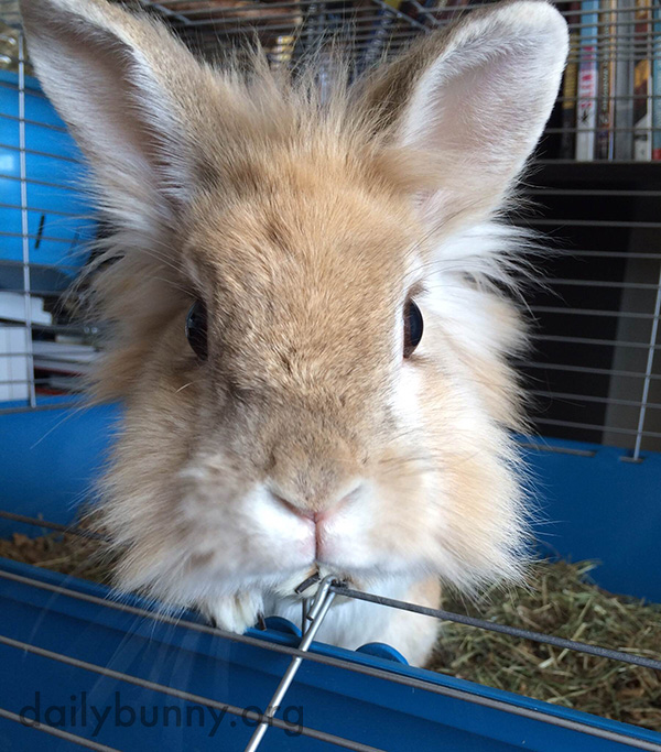 That Is One Big Mouthful of Hay, Bunny 2