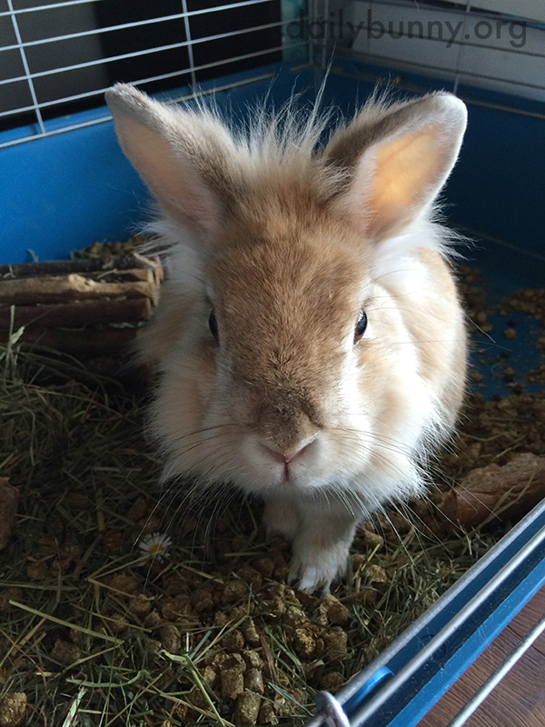 That Is One Big Mouthful of Hay, Bunny 3
