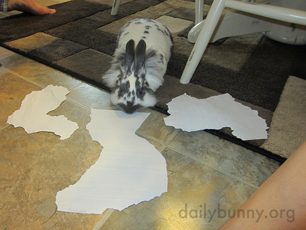 Artist Bunny Nibbles Geographical Shapes Out of Paper 1