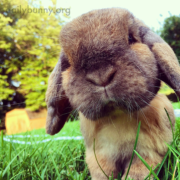 Bunnies Get Close to the Camera to Make It Easier to Document Their Cuteness 1
