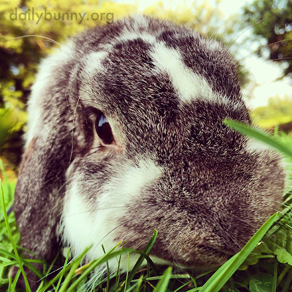 Bunnies Get Close to the Camera to Make It Easier to Document Their Cuteness 2