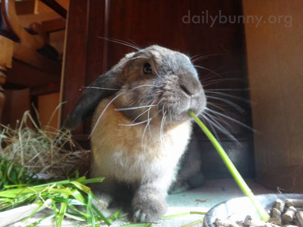 Bunny Attacks Some Carrot Greens 4