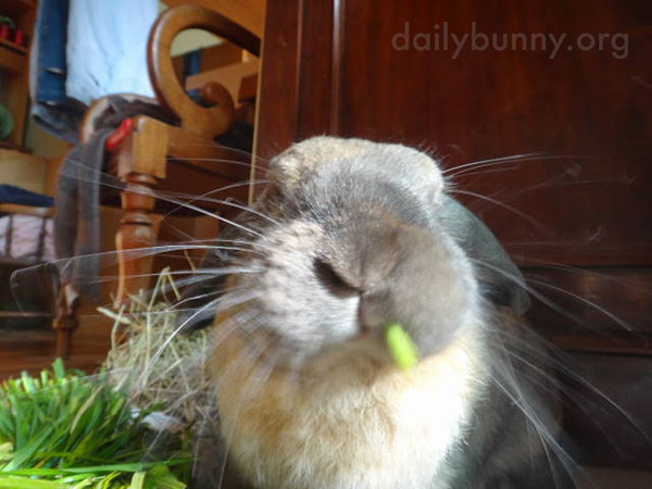 Bunny Attacks Some Carrot Greens 5