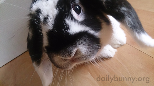 Bunny Gets Close to Examine the Camera