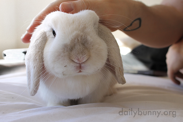 Bunny Keeps a Human on Staff for Pettings 3