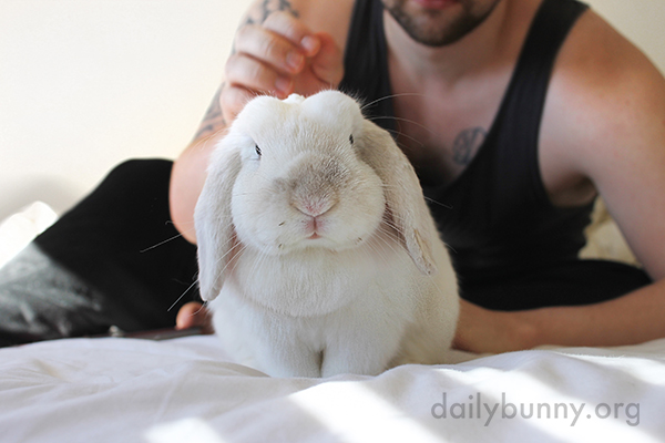 Bunny Keeps a Human on Staff for Pettings 4