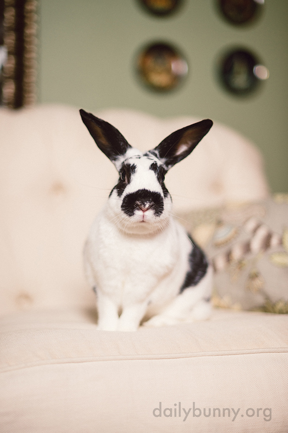 Bunny Knows Just How to Pose for a Formal Portrait