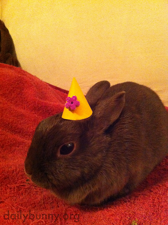 Bunny Wears a Tiny Hat