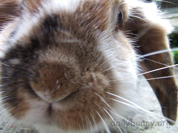 Closeup of Bunny's Fuzzy Nose