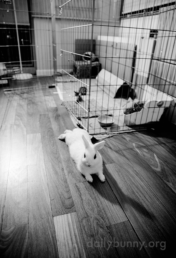Where Do You Think You're Going, Human? This Enclosure Is for Bunnies Only. 2