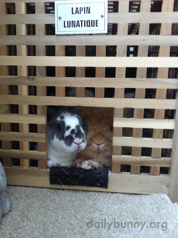Beware of Bunnies!