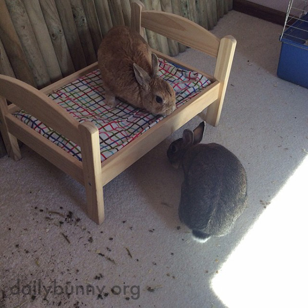 Bunnies Check out Their Bunny-Sized Bed 1
