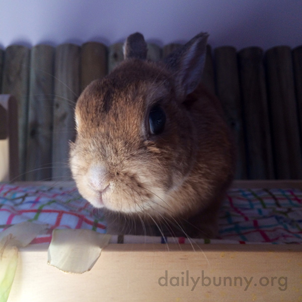 Bunnies Check out Their Bunny-Sized Bed 2