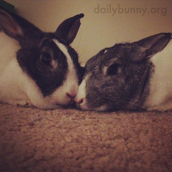 Bunnies Relax Nose-to-Nose