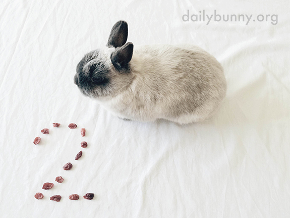Bunny Celebrates His Birthday with Cranberry Treats