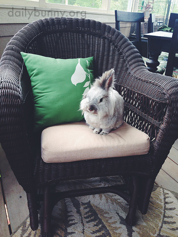Bunny Has Claimed This Chair