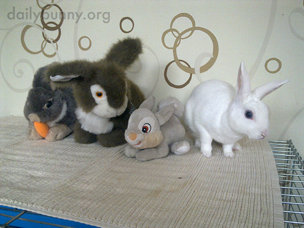 Bunny Is a Little Weirded Out by These Guys