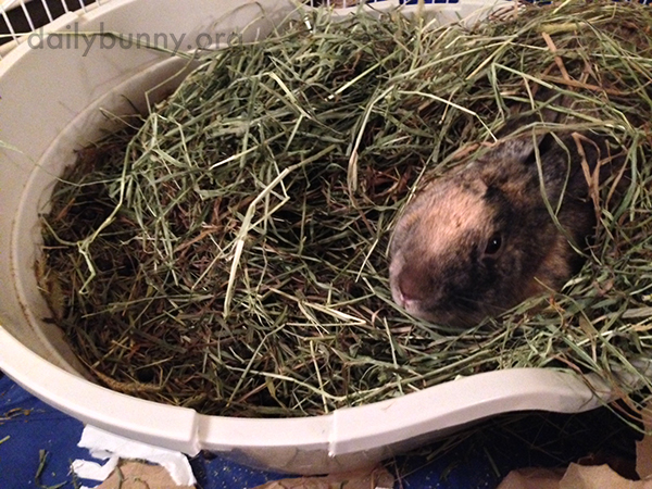 Bunny's Hay Is Perfect for Burrowing In