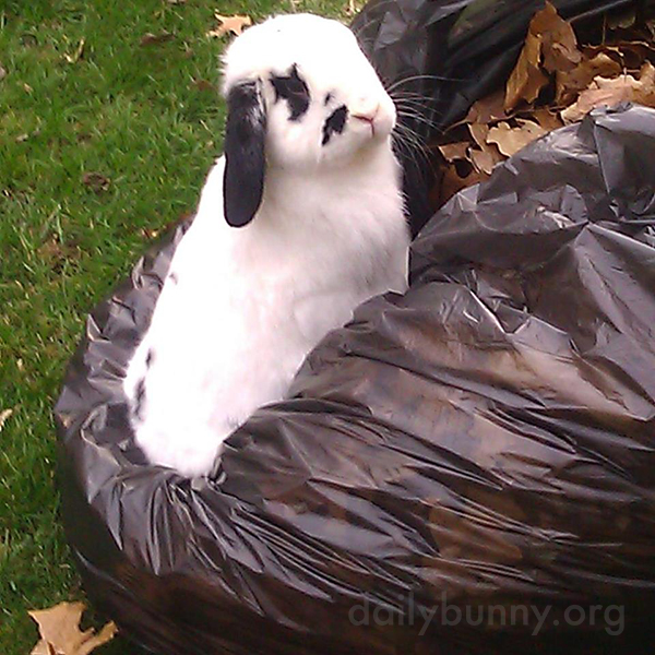 Human Is Very Considerate for Putting All Those Fun, Crunchy Leaves in One Place for Bunny