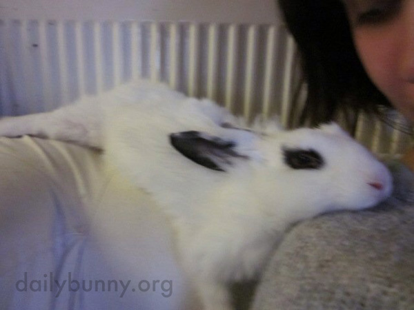 Languid Bunny Melts onto His Human's Shoulder 1