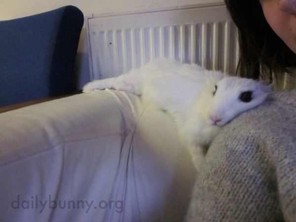 Languid Bunny Melts onto His Human's Shoulder 2