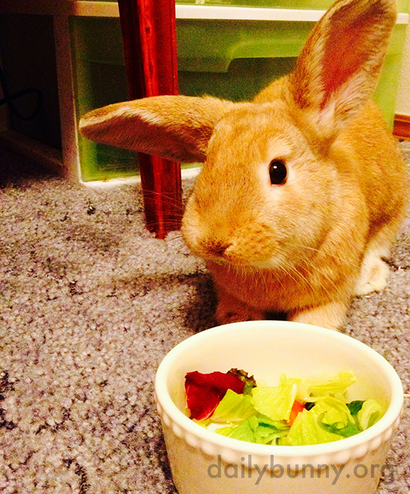 Thanks for the Veggies, Human, But I Would Like to Nom in Private Now