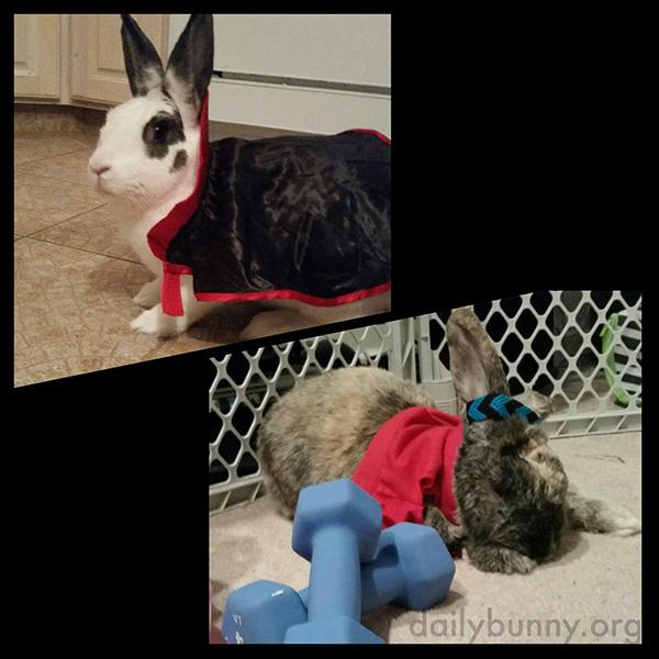 The Daily Bunny's Halloween 2014 Mega-Post! 10