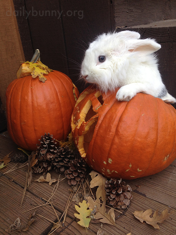 The Daily Bunny's Halloween 2014 Mega-Post! 2