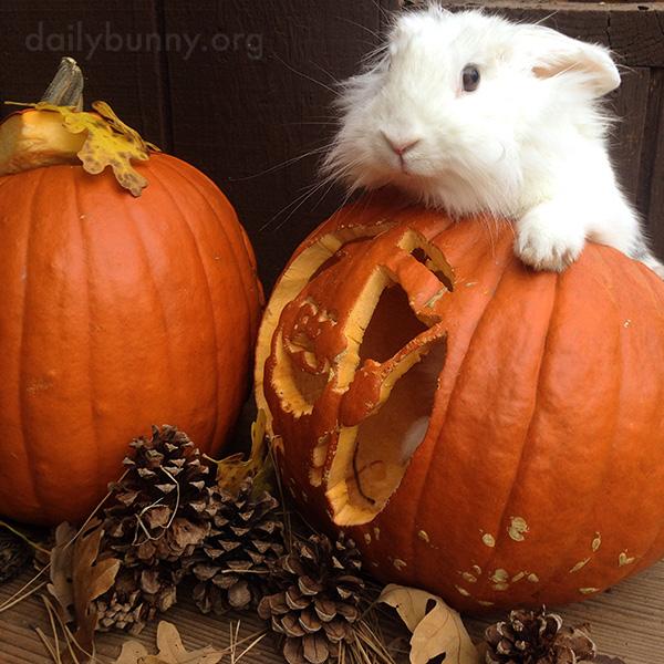 The Daily Bunny's Halloween 2014 Mega-Post! 3