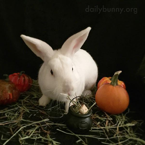The Daily Bunny's Halloween 2014 Mega-Post! 4