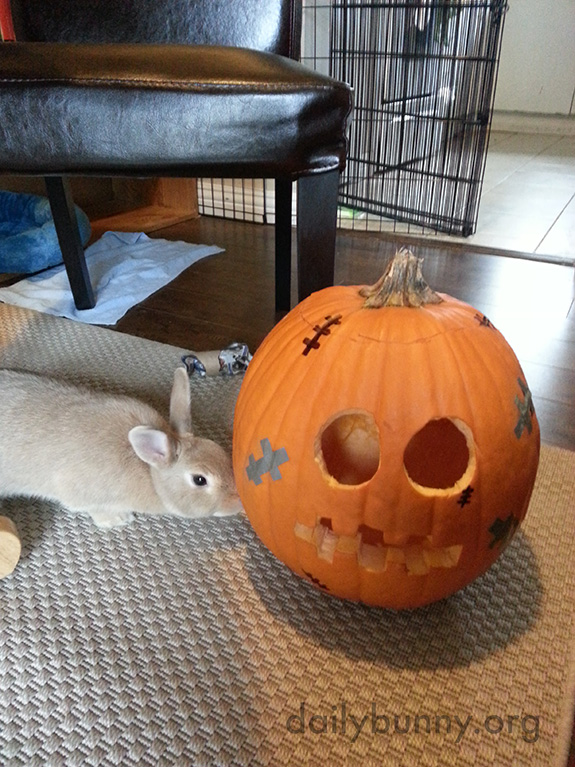The Daily Bunny's Halloween 2014 Mega-Post! 5