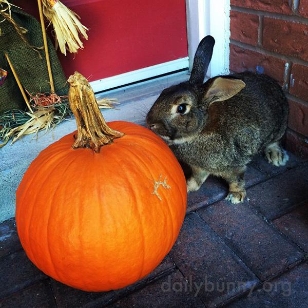 The Daily Bunny's Halloween 2014 Mega-Post! 6