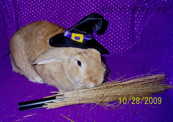 The Daily Bunny's Halloween 2014 Mega-Post! 7