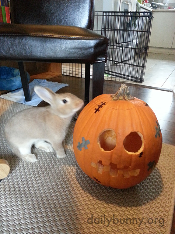 The Daily Bunny's Halloween 2014 Mega-Post! 8